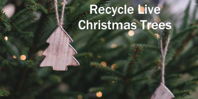 City to assist residents in recycling live Christmas trees