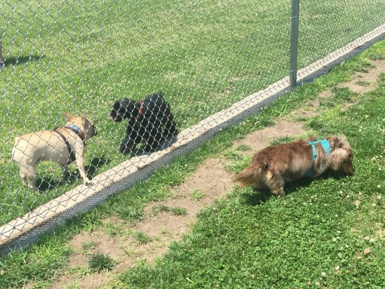 Your furry friend would love a Muscatine Dog Park annual pass