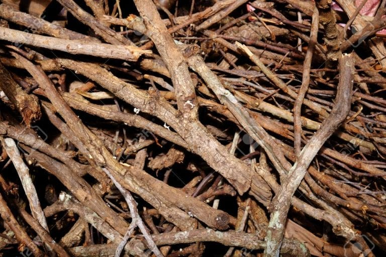 Call Parks and Rec today to be placed on firewood availability list